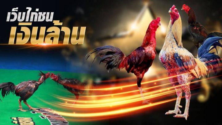 ไก่ชนเงินล้าน ศึกษาพันธุ์ไก่ทำเงิน รวยง่าย ๆ ได้ทุกวัน